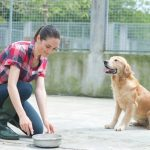 Get Pet Boarding Services in Singapore for an Affordable Price