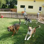 Steps On How To Care For Dogs At Doggy Daycare In Raleigh Nc